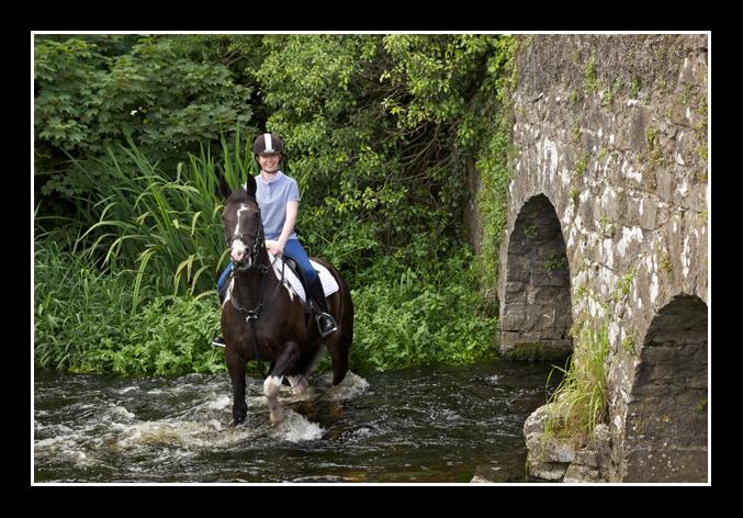 Horse Portrait 6