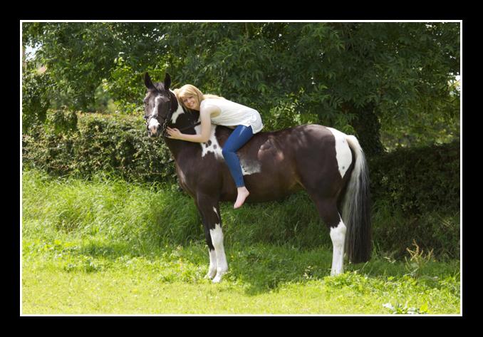 Horse Portrait 7