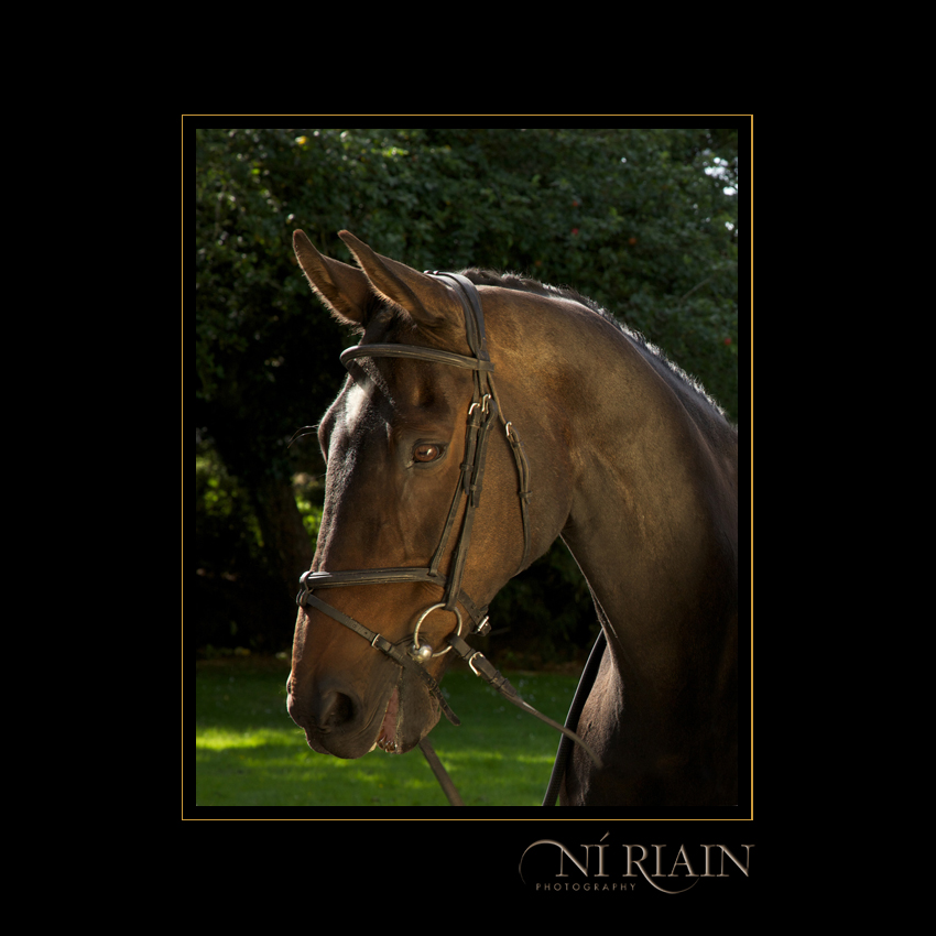 Chloe O'Flynn Event Rider and her eventing horse Equine photo Ni Riain Photography 009