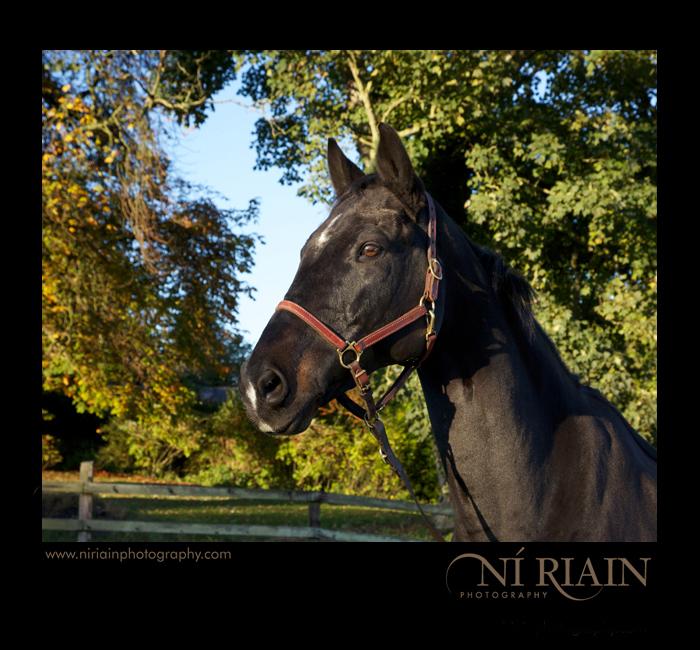 Equine professional Photographer Ireland Ni Riain Photography Ti